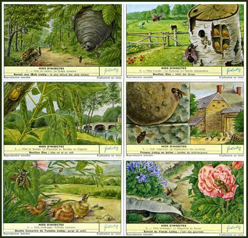 La classification des insectes des parasites